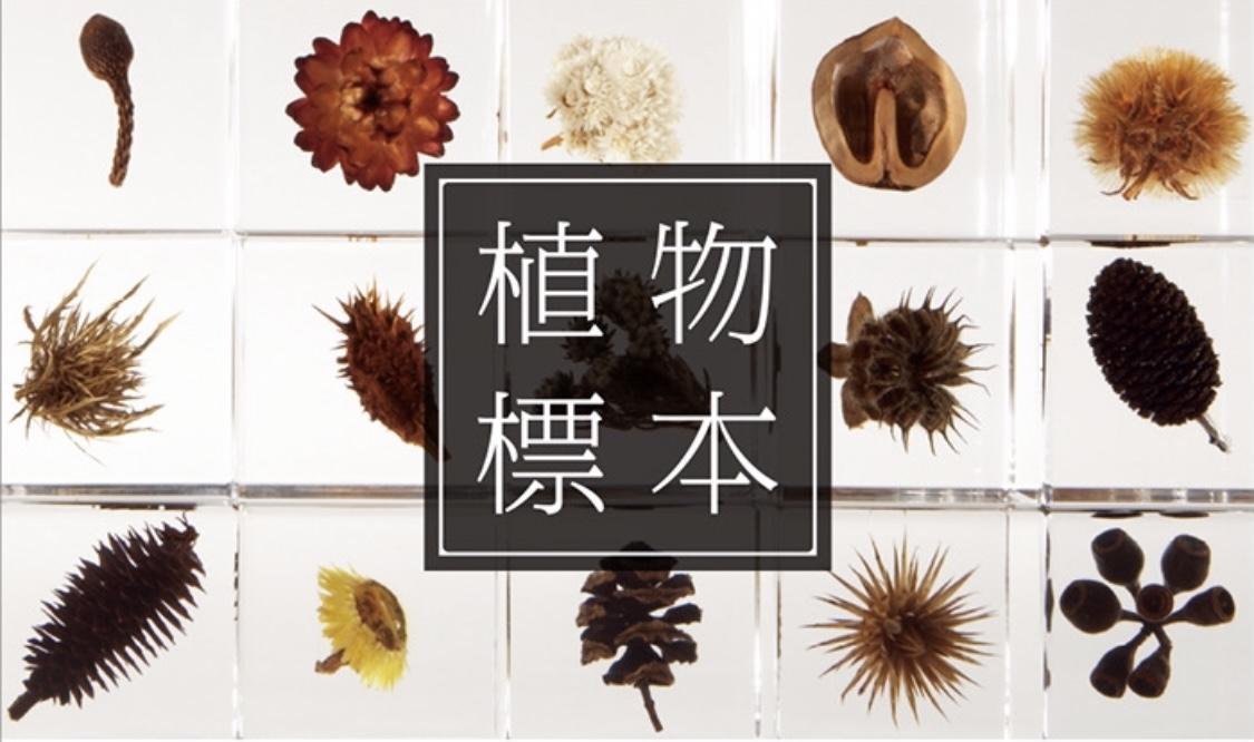 Sola cube 「植物の美しいかたち」
